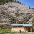 蜂の巣公園の桜 日南市